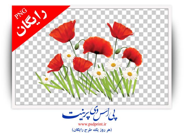 طرح png گل لاله