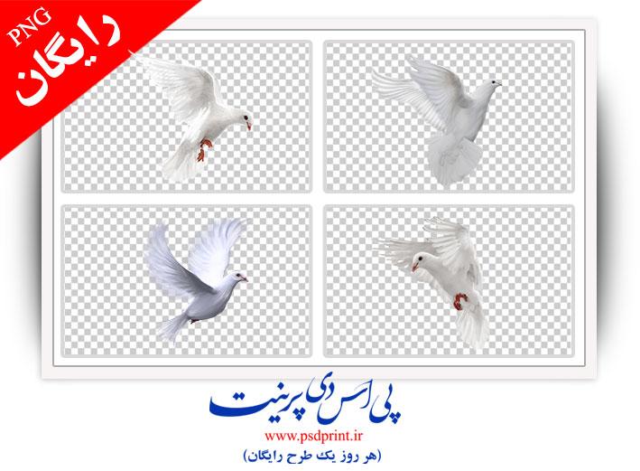 طرح دوربری رایگان کبوتر