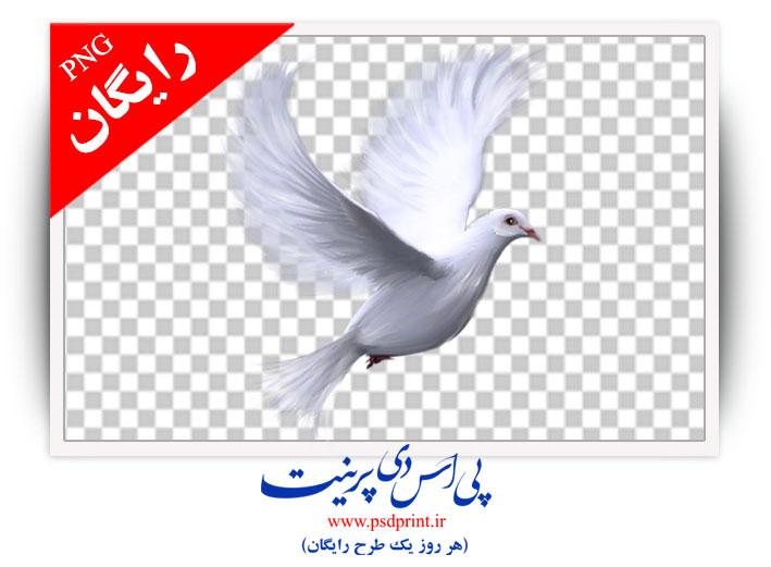 دوربری رایگان کبوتر