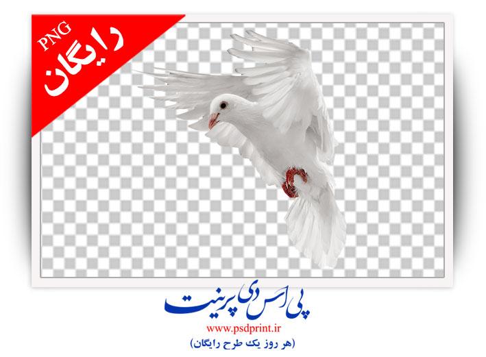 دوربری کبوتر رایگان