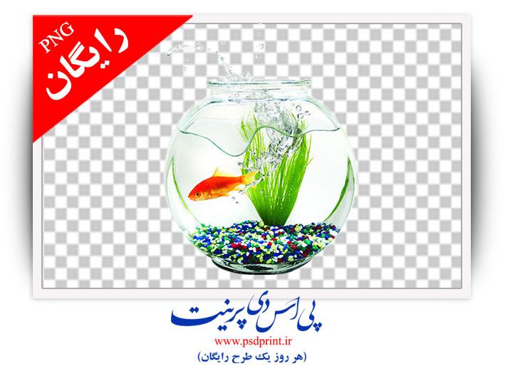 دوربری تنگ ماهی