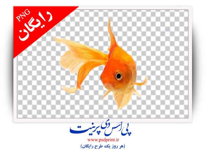 دوربری ماهی قرمز