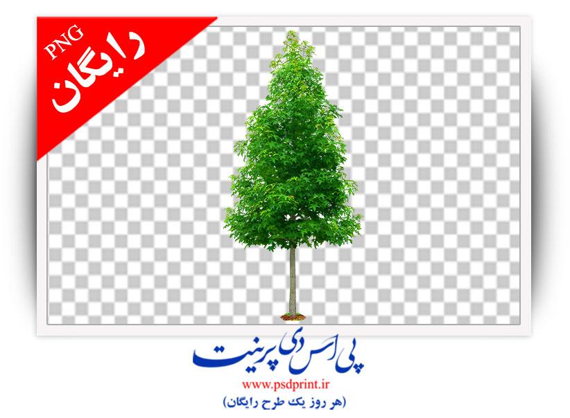 دوربری رایگان درخت
