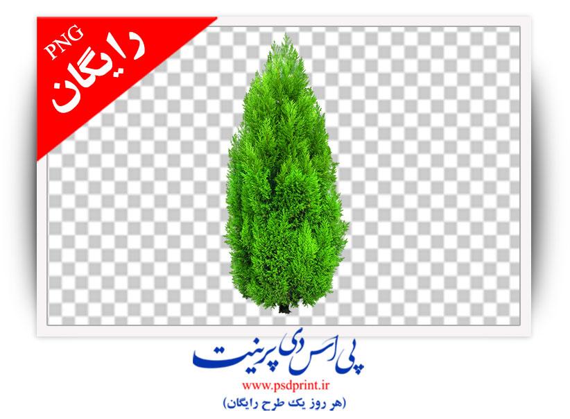 دوربری رایگان نهال درخت