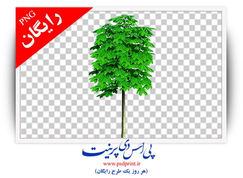 دوربری نهال درخت