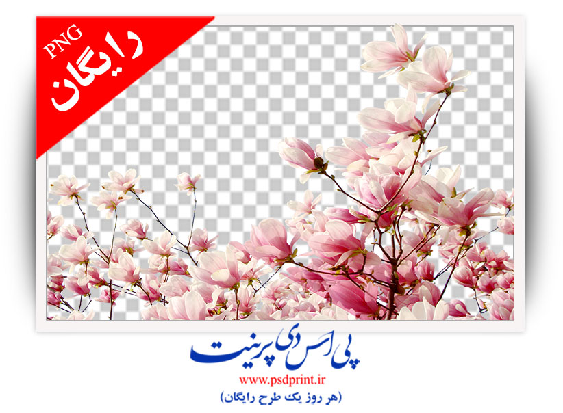 دوربری شکوفه درخت