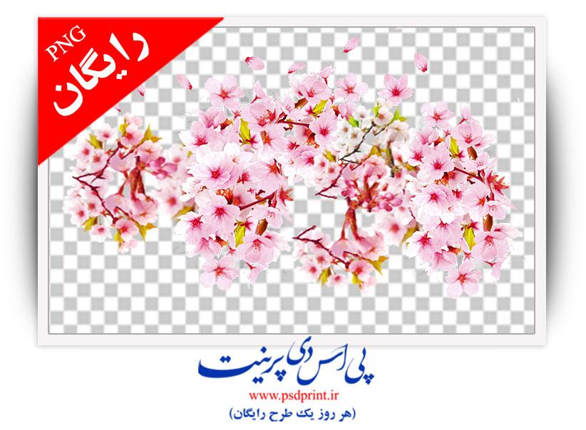 دوربری شکوفه بهاری